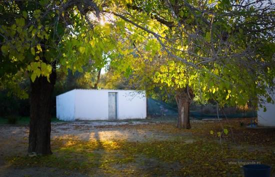 Entre las hojas