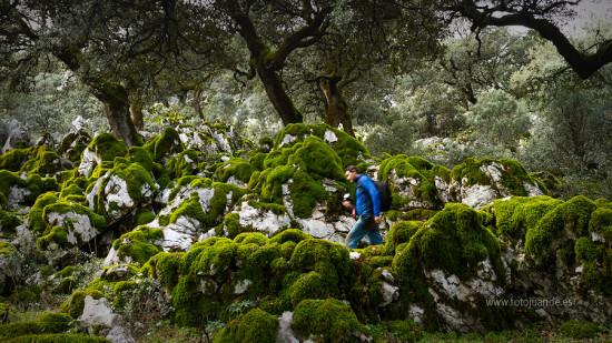 Llegó el invierno a la Sierra de Cádiz, por fin.